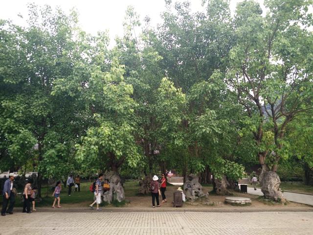 Kết quả hình ảnh cho cây bồ đề tại chùa Bái Đính